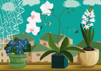 Så får du glada orkidéer