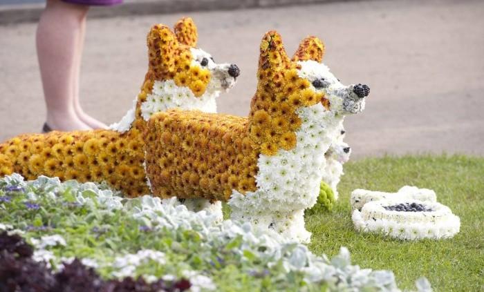 Kungliga hundar