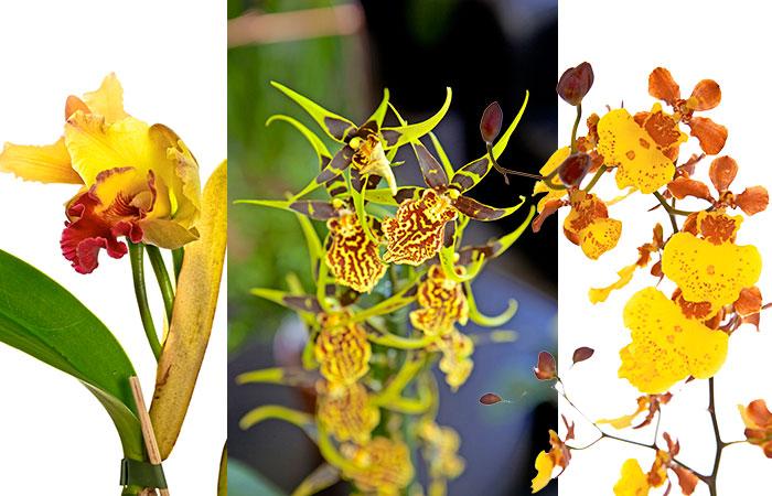 orkide_1