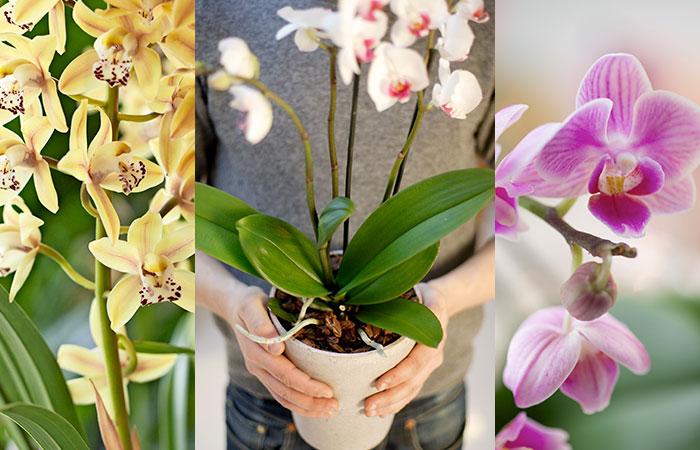 orkide_3