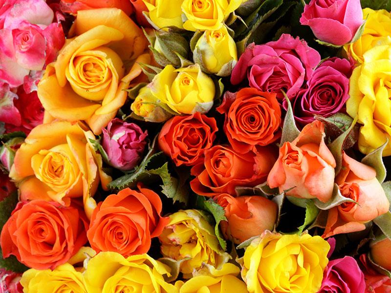 antal rosor betyder vad