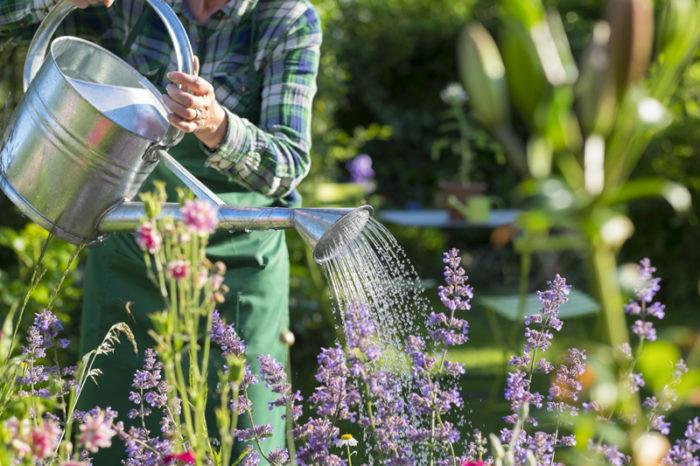 trädgårdsklädd person vattnar med vattenkanna