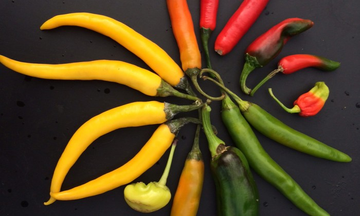 inlagd chili, recept