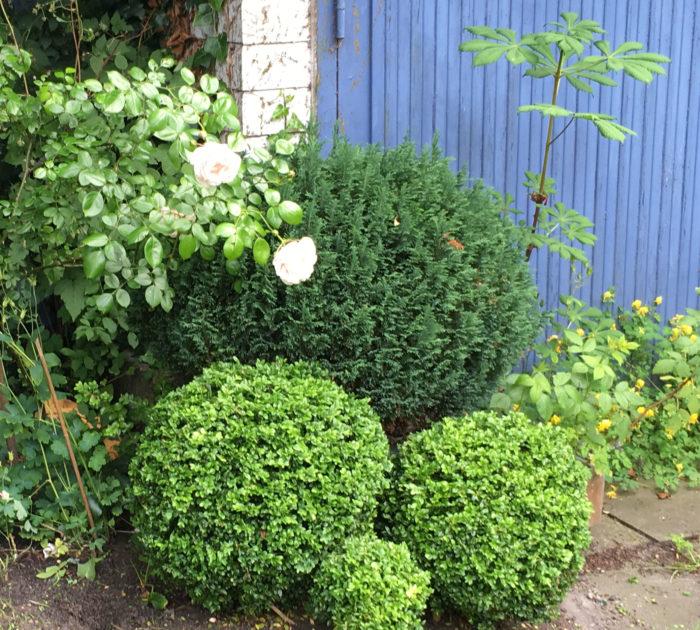 kastanj, plantera kastanj