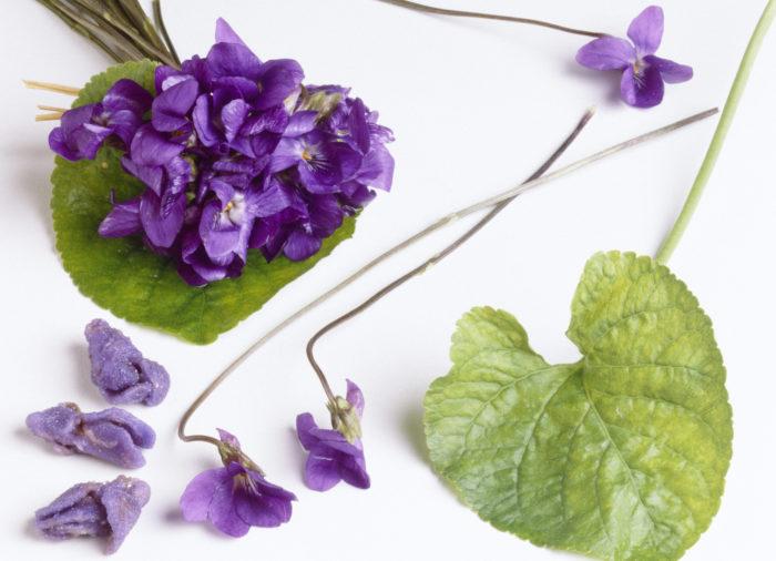 viollikör