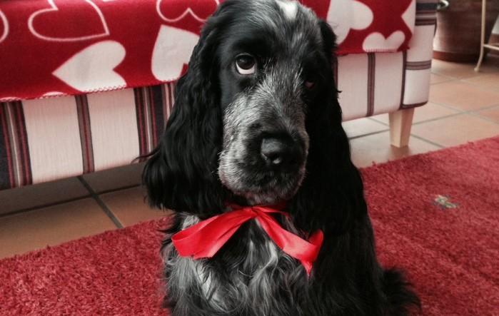 Se till att din hund eller katt inte knycker det här från julbordet!