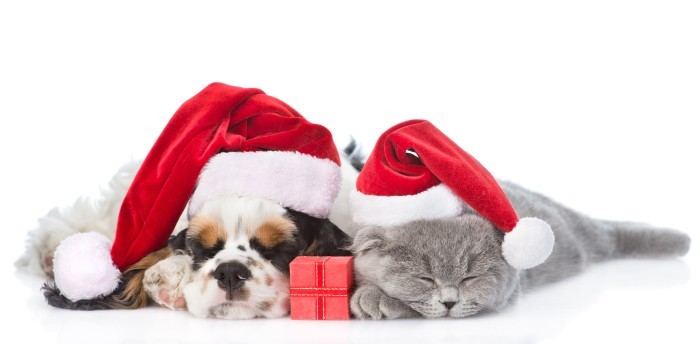 Faror för din hund eller katt under julen