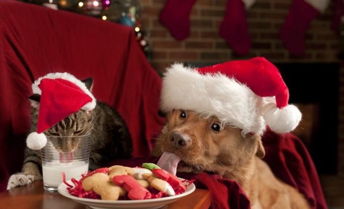 Julfaror för hund och katt