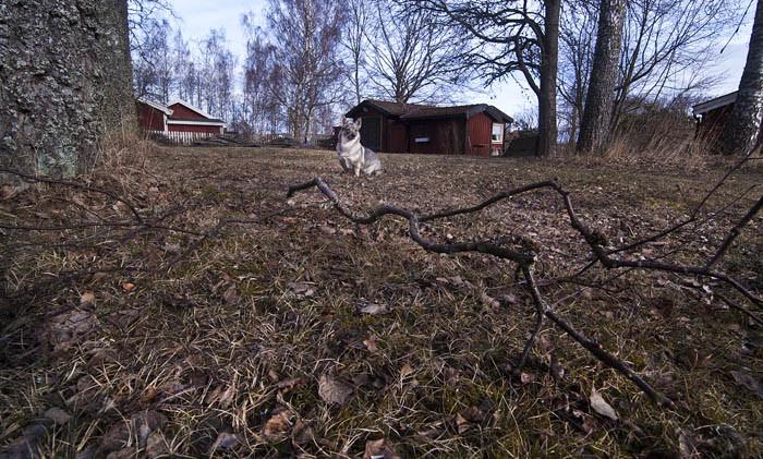 Nedfallna björkkvistar, gamla löv och oklippt gräs. Så är det hemma hos mig. Det är husses fel. Så ser det verkligen inte ut hos mina grannar. De har det grant i sina trädgårdar.