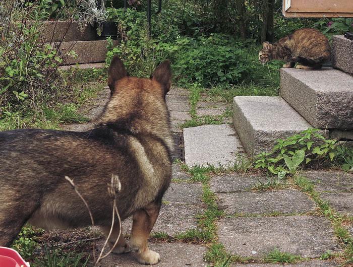 Nu har Lucy flyttat till Sverker. Första veckan gömde hon sig, men sedan blev de bästisar.