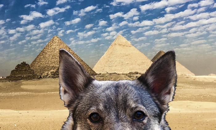 Det är lika bra att dra till ordentligt direkt. Hur många västgötaspetsar har sett pyramiderna i Egypten. Här har du beviset att jag varit där. Förra veckan faktiskt.