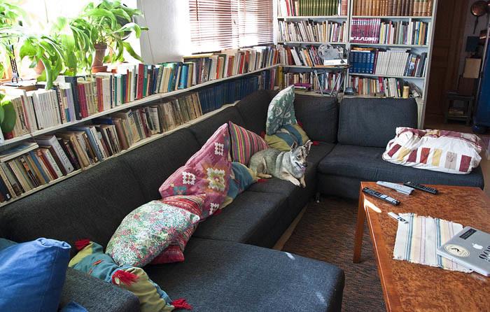 Den nya soffan är gigantisk. Alla får plats i den. Bordet fick inte plats, så det har vi köpt ett nytt på loppis. Soffan kommer att bli väldigt stor för bara husse och mig. Särskilt med tanke på att han alltid sittare på min plats, så jag är tvungen att ligga på honom.