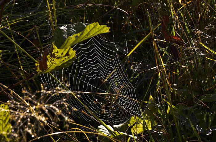 ENSAM Jag är inte ensam om att vara ensamast. Den här stackars spindeln hade minsann ingen granne. Är det ingen som tycker om henne, fastän hon kan göra så fina nät?