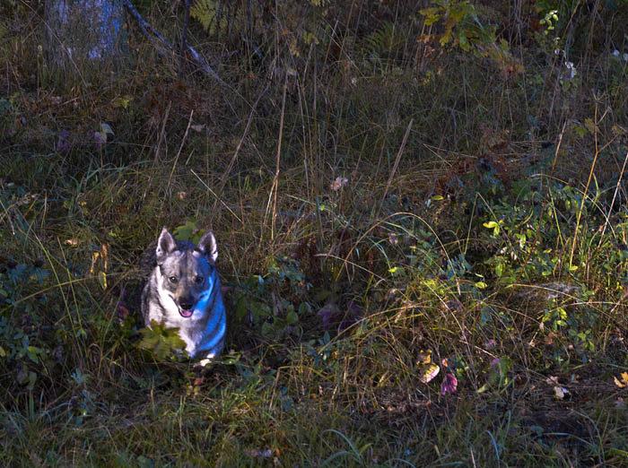 ENSAM Här ser du mig Vaira komma ut från skogen, men ser du någon annan? Nej, det gör du inte, för jag är alldeles ensam. Inte ens en pudel hittade jag i skogen.