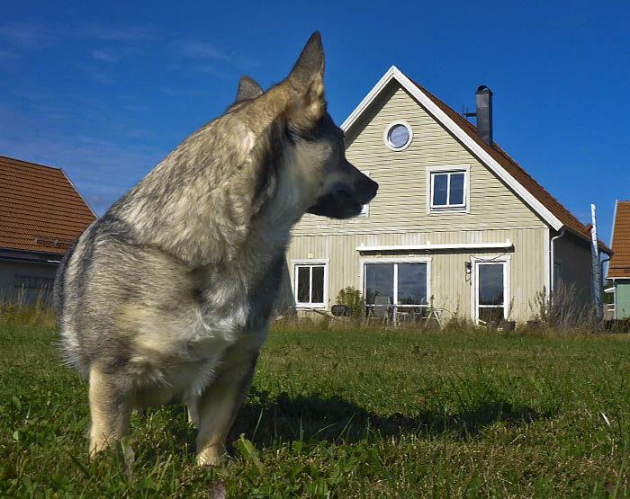 Detta är min Pers hus. Jag och min husse var där igår. Snart ska det säljas, för det finns ingen Per mer. Vi tycker alla att det är väldigt sorgligt.
