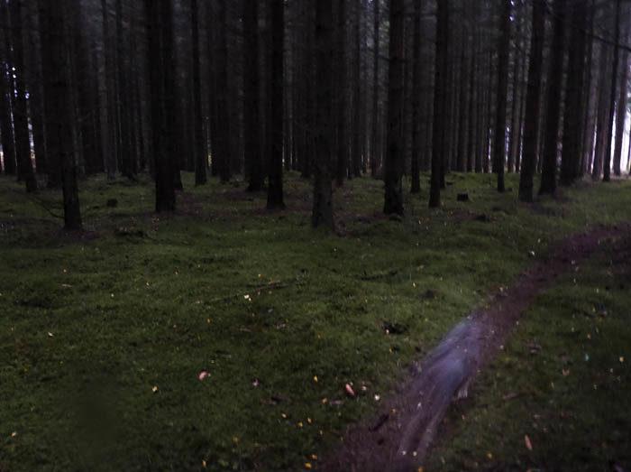 När det aldrig blir ljust i skogen, det är då du ska passa på att fotografera suddiga västgötaspetsar. Detta är förstås om din läggning är åt det hållet. Ser du mig? Det är jag som är den suddiga massan i nedre högra hörnen. Vänster baktass syns ganska tydligt.