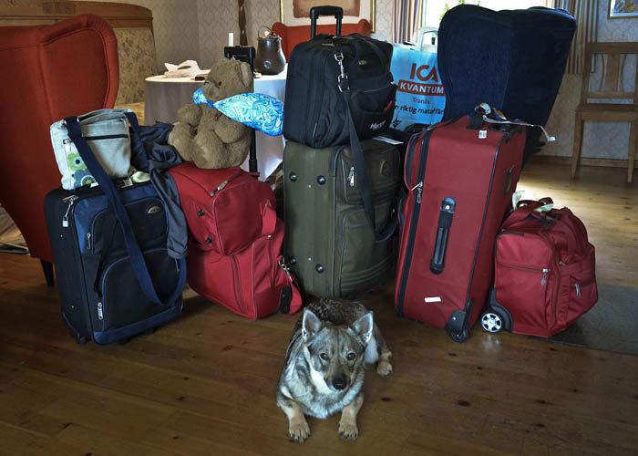 Alla väskor som helt plötsligt befann sig i mitt finrum, eller vardagsrum (välj själv). Jag vaktar så ingen tar dem. Dessutom vill jag följa med.