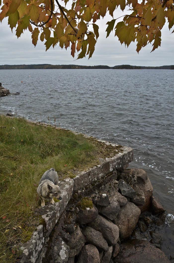 Du ser själv att det är precis lagom med vatten i hela sjön. Vattnet når precis upp till vattenytan. Ser du på stenarna vid min strand, så kan du se var vattenytan finns ibland. Fast då ska du veta att resten av vattnet följer med uppåt.