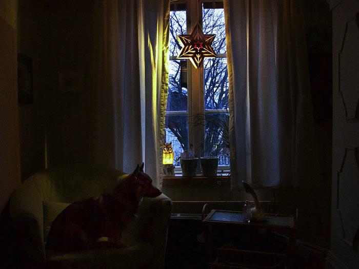 En adventsstjärna hängdes i fönstret mot Lasse och Malene. Bakom kudden i fåtöljen, som jag sitter i, ligger två väl gömda tuggben. Det vet inte Charlie om.