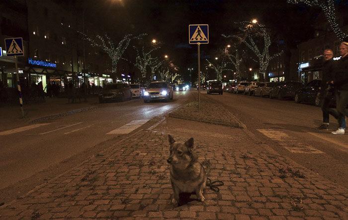 Jag beslöt att visa upp mig på Storgatan i Tranås. Naturligtvis väckte jag allmän beundran. Ryktet att jag skulle besöka stan hade tydligen spritt sig, för det var väldigt mycket folk där.