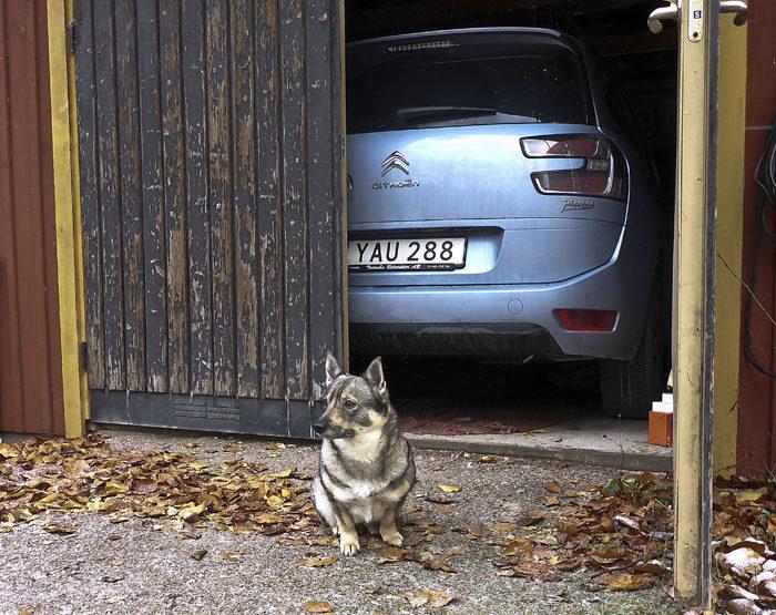 Här är beviset att den nya stora bilen inte är fullt så stor som min husse trodde. Eller att garaget inte är fullt så litet. Det går visst att stänga dörrarna. Dessutom med flera (=2) centimeter tillgodo.