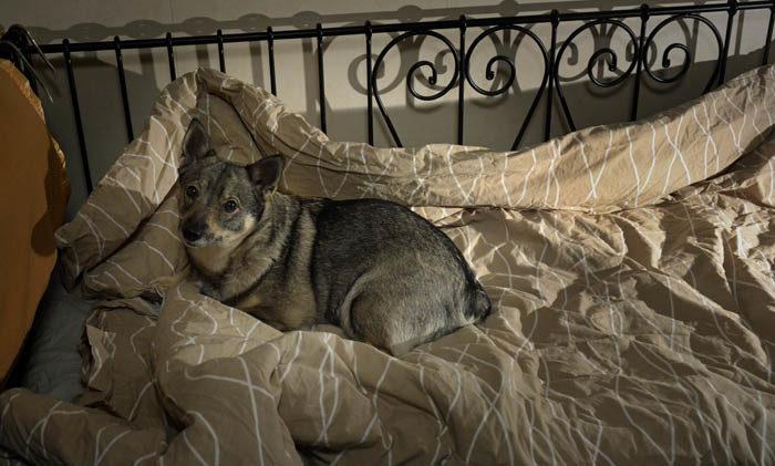 Det är inte konstigt att du inte känner igen min säng. Det är nämligen inte alls min säng. Trots att den är så smal, så envisades husse med att ta upp merparten av den säng som var avsedd för mig. Men var bor sängen?