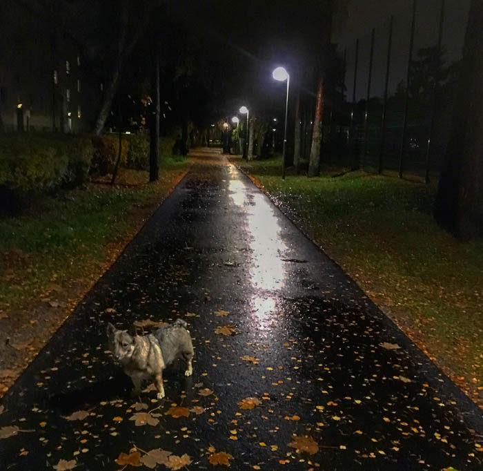 Folket här i förorten är mörkrädda. Därför har de lampor som lyser på både vägar som gångbanor. Dessutom vill de inte ha smutsiga tassar, så de har lagt asfalt där man ska gå. Min gata, i huvudstaden Tranås, saknar både asfalt och belysning.