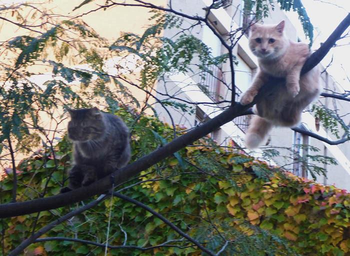 I Toulouse har de trädkatter. De sitter där hela dagarna, ända tills de går ner. Helst hade jag sett att jag sluppit fler bilder på katter.