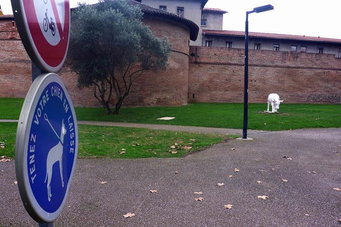 Skylten till vänster betyder att hundar absolut inte får vara kopplade. Lägg också märke till att det går omkring vita kossor som sköter gräsmattorna. Kossan stod på precis samma ställe jag senast var i Toulouse. Konstigt.