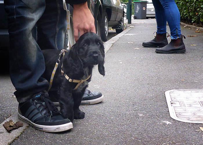 Nu har jag fått det bekräftat. Hundvalpar är svarta. Jag kommer inte ihåg att jag var svart, men det var jag nog innan jag fick min vackra färg jag har nu. Jag undrar vad Charlie ska få för färg när han blir stor?