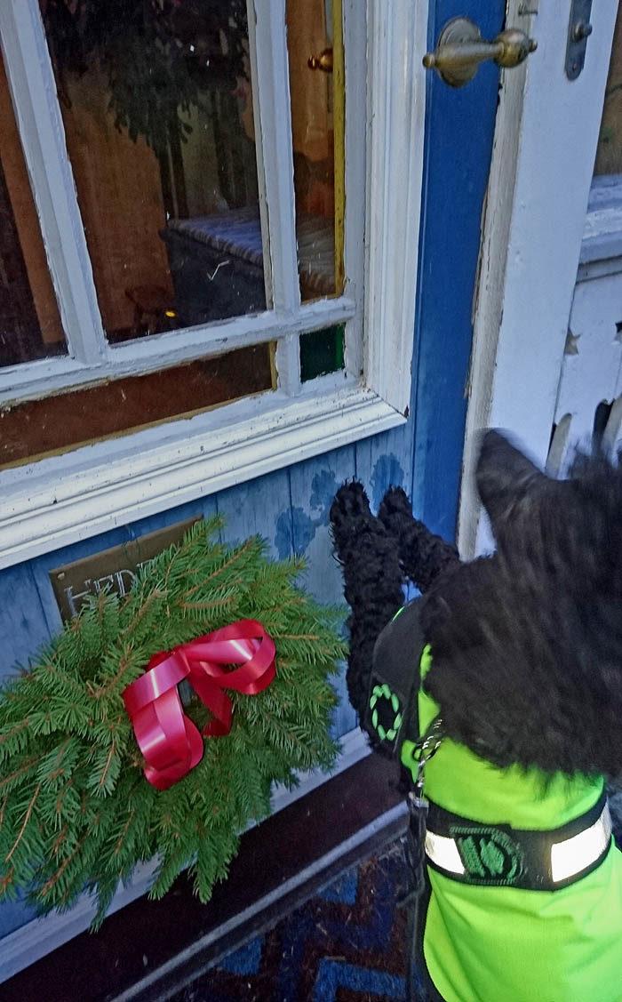 När vi skulle gå, så krafsade jag lite extra. Kanske Vaira bara hade gömt sig? Men det hjälpte inte. Dörren öppnade sig inte och ingen Vaira fanns det att se. Fast min matte sa att hon kommer hem snart, men först ska vi fira jul i Trollhättan.