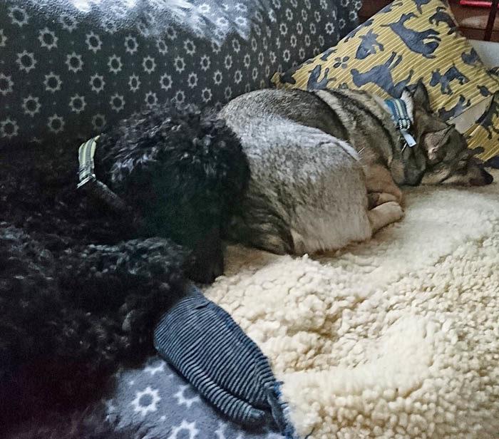 Det är mycket att stå i och då är det inte konstigt att man blir lite trött. Både Charlie och jag (som bara är vänner) ligger och tar en power nap i soffan mitt på dagen. Sedan blir det full fart igen.