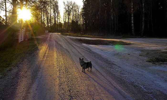 Varje morgon, som det ej är molnigt eller dimma, så lyser min sol så fint på mig., när jag tar min morgonpromenad. Kommer det bli samma i Aurignac?
