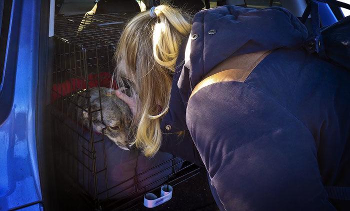 Inte undra på att jag ser ledsen ut. Min Agnes överger mig igen, bara för några djur i diken. Det skulle inte heller förundra mig, om hon drar till min Sabrina och hennes gigantiska katt Diva om någon vecka.