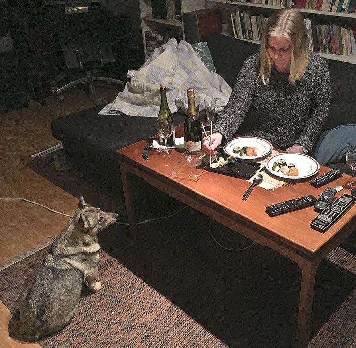 Det dukades till fest nere i källaren. Fast sushi och champagne är ganska kass. Det blir ingen fördisk av det. Som tur var, så var sushin bara förrätt, det kom annat efteråt.