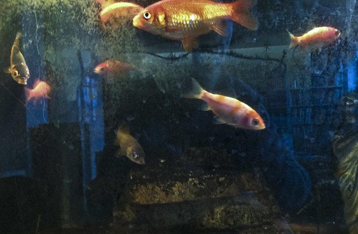 Inte nog med vad som visas på tv, man har dessa fiskar som stirrar på dig hela tiden. Alla från utlandet. De lever bara på bidrag. Jobbar inget. Bara tigger. Och stirrar.