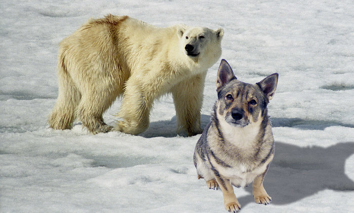 Tro det eller ej, men denna bild är inte från Tranås. Vi har inga isbjörnar här och jag är inte så stor. Bilden är ett fotomontage. Fast trots det, så är bilden ett bra bevis på en alternativ sanning.