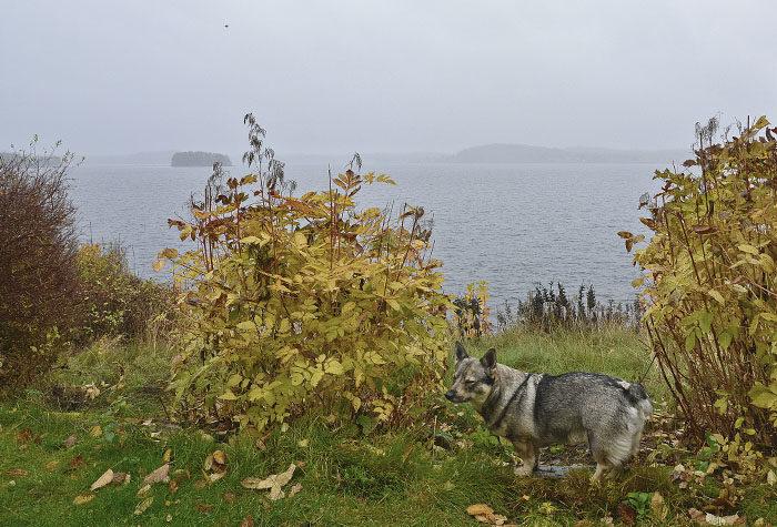 Eftersom vi ska flytta, så kanske det skulle kunna vara kul med en bild på mig och min utsikt över min sjö. Att ta den bilden en dimmig dag, då inte sjön syns, säger mycket om fotografen.