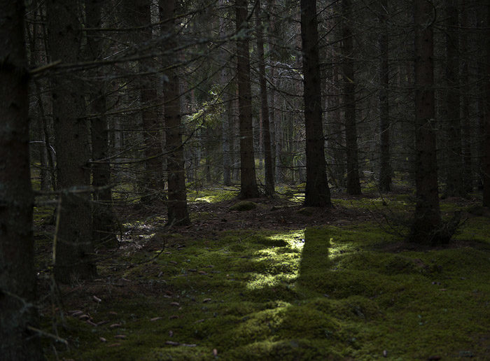 Här och var skiner solen in i min skog. Om den inte gjorde det, så skulle det vara alldeles svart. Det är det lite senare på kvällarna.