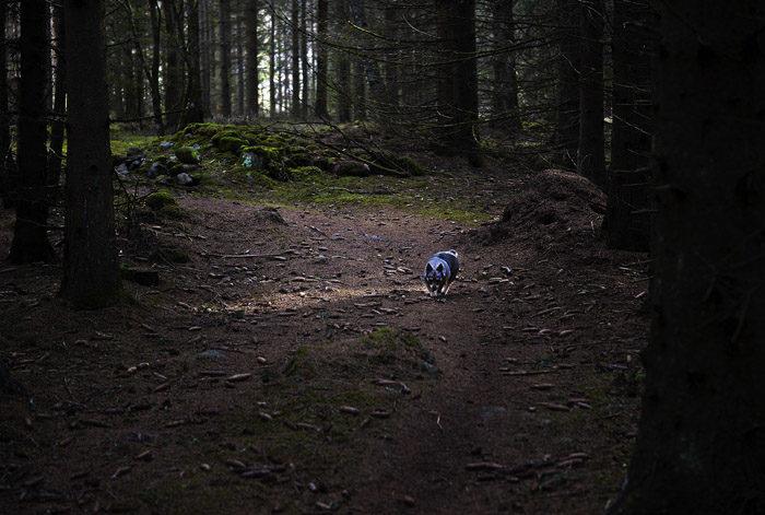 Vem är den modiga västgötaspetsen som vågar lufsa omkring i en mörk skog, som är alldeles full med häxor, troll, vargar, björnar och myror. Jo, det är ju jag Vaira. Ser du inte det?