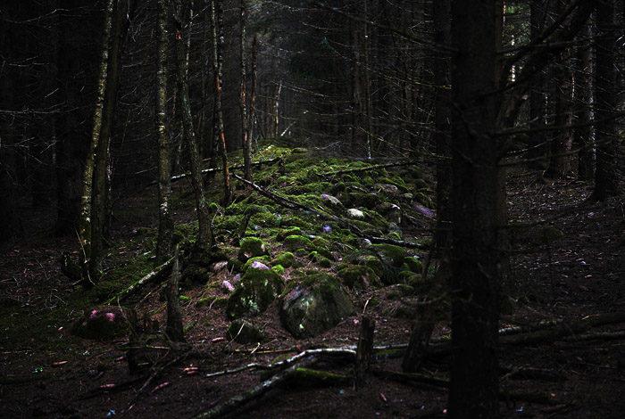 Mitt i skogen ligger denna mur, mödosamt bygd av några tidigare invånare. Varför gjordes då denna mur? Är det för att skydda sig från elaka invånare på andra sidan muren, eller …