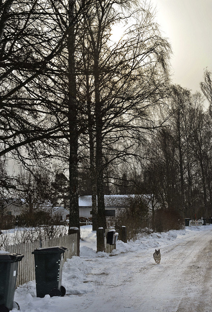 Till och med Tranås kommun upptäckte att det snöade och de har plogat vägen. De har till och med sandat. Soptunnorna står vid vägen för att det är tisdag jämn vecka idag. Då kommer det nämligen en bil som tömmer våra sopor.