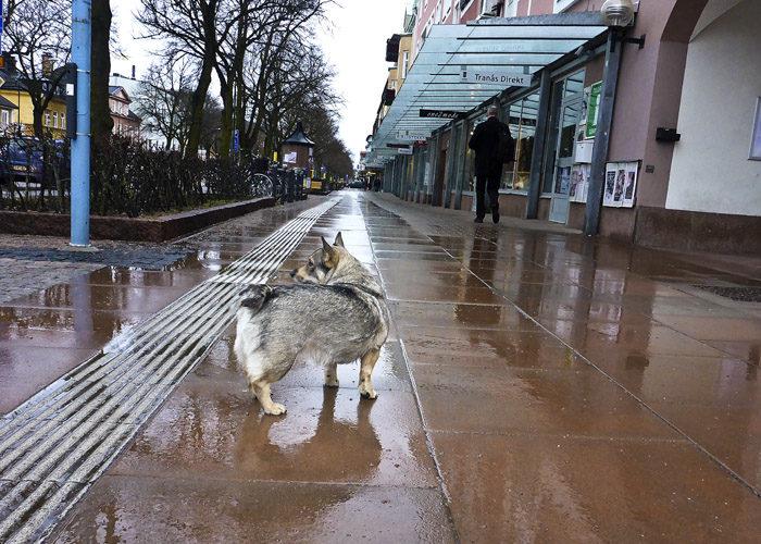 Detta är en typisk bild från en Aurignacträning på Storgatan i Tranås en regnig fredag. Det går ju jättebra som du själv kan se.