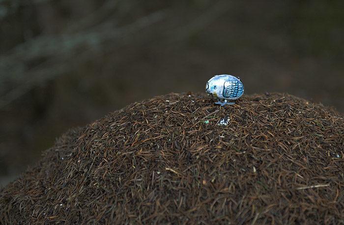 Den första fågeln vi hittade var den lilla blåmyrsparven. Den satt uppe på myrstacken, som vanligt, och väntade på att det skulle dyka upp en myra. Skulle den få syn på en, så blir den myran den lilla sparvens frukost. Det är grymt i naturen.