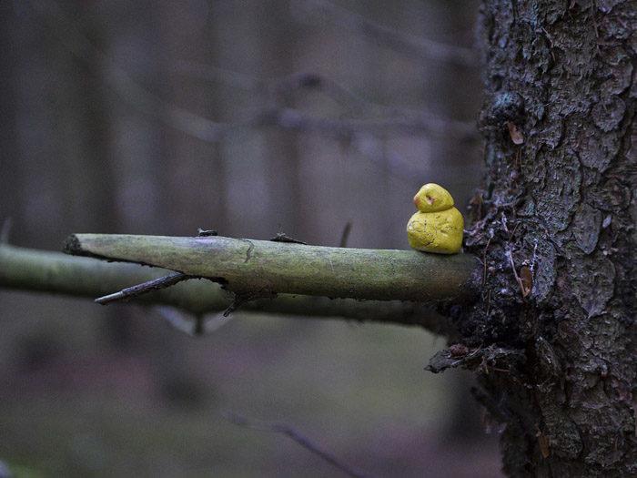 Den gula lermesen ser jag inte ens varje år, fastän jag som expert vet var jag ska titta. Men idag på morgonen dök den bara upp. Det är ovanligt tidigt på året, med tanke på den långa flytten från Botswana, där den har tillbringat vintern.